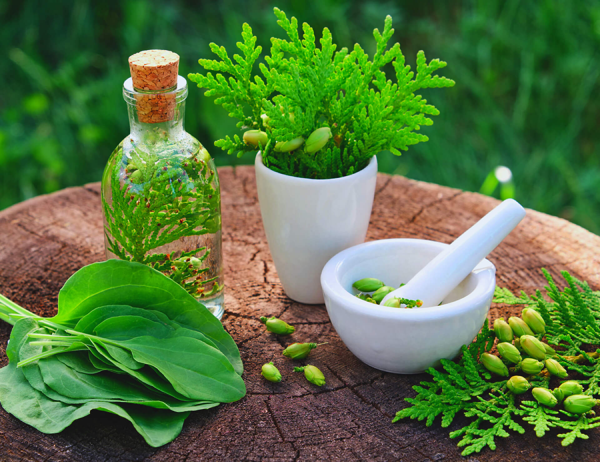 bottle of thuja infusion or oil, mortar and plantain leaves