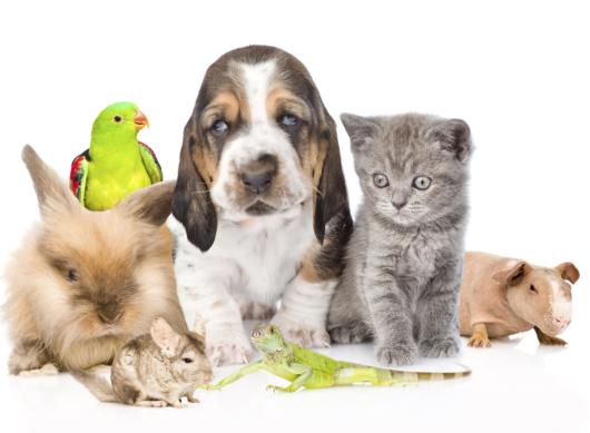 Big group of cute pets